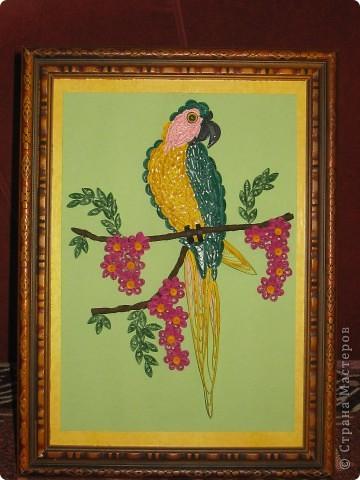 Здравствуйте. Представляю свою работу. Попугай сделан по образцу, который я подсмотрела у Енюши ( спасибо за ссылку на бразильский сайт). Промучилась с клювом, но результатом довольна.