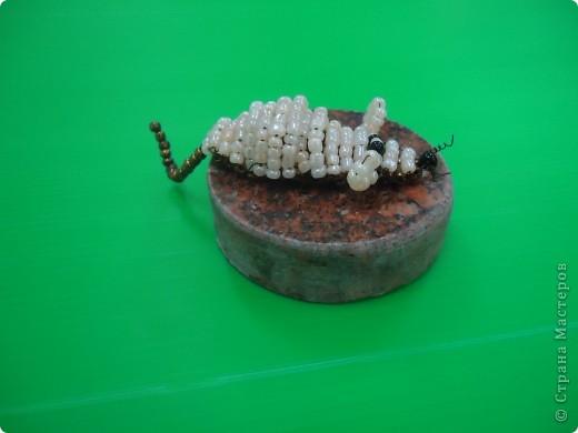 Мышонок фото 4