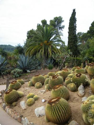 Кактусы, ч 1. Испания. Санта Сусанна.  Ботанический сад.  фото 2