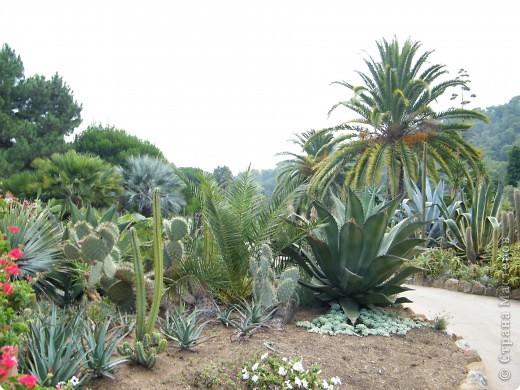 Кактусы, ч 1. Испания. Санта Сусанна.  Ботанический сад.  фото 4