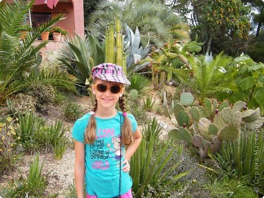 Кактусы, ч 1. Испания. Санта Сусанна.  Ботанический сад.  фото 5