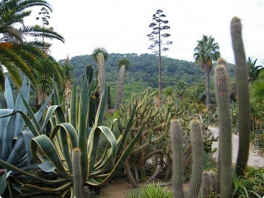 Кактусы, ч 1. Испания. Санта Сусанна.  Ботанический сад.  фото 6