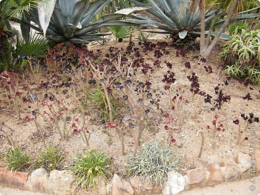 Кактусы, ч 1. Испания. Санта Сусанна.  Ботанический сад.  фото 7