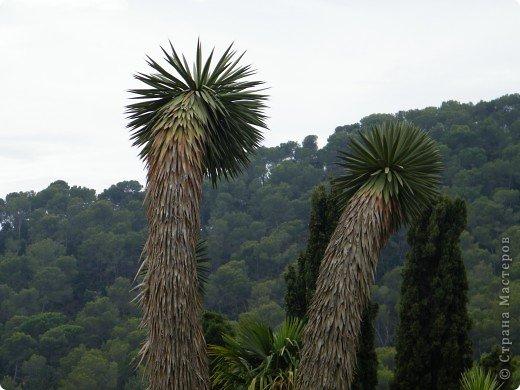 Кактусы, ч 1. Испания. Санта Сусанна.  Ботанический сад.  фото 10