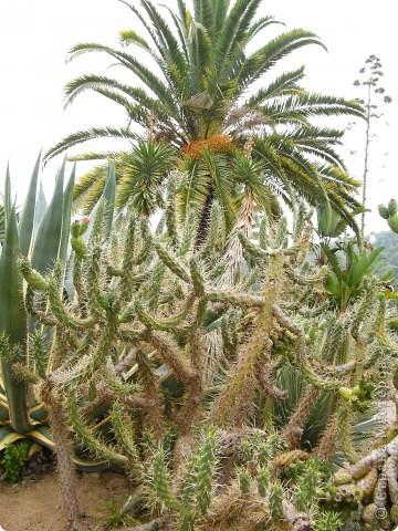 Кактусы, ч 1. Испания. Санта Сусанна.  Ботанический сад.  фото 11