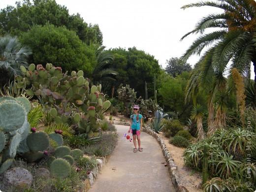 Кактусы, ч 1. Испания. Санта Сусанна.  Ботанический сад.  фото 14
