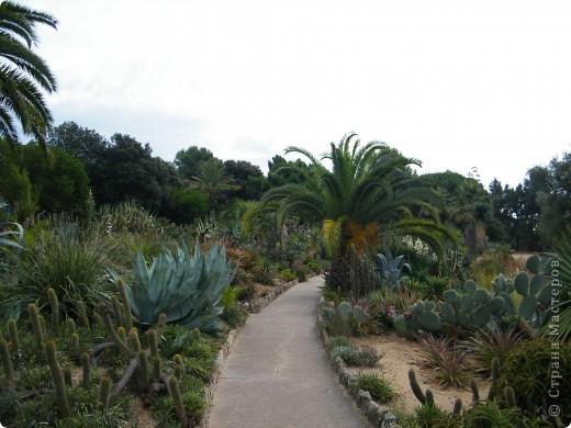 Кактусы, ч 1. Испания. Санта Сусанна.  Ботанический сад.  фото 29