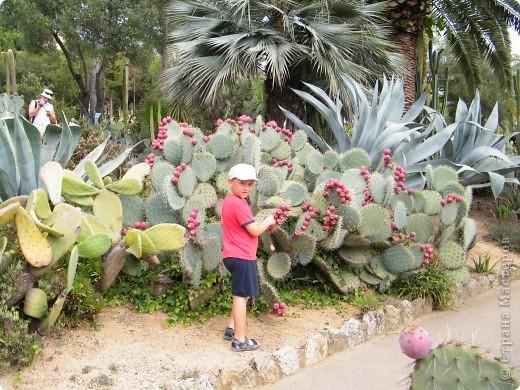 Кактусы, ч 1. Испания. Санта Сусанна.  Ботанический сад.  фото 17