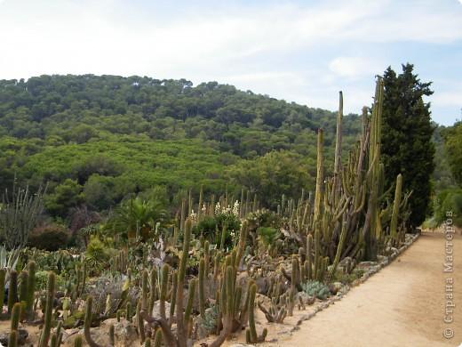 Кактусы, ч 1. Испания. Санта Сусанна.  Ботанический сад.  фото 23