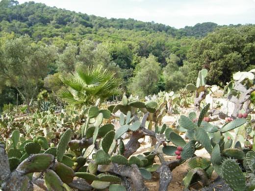 Кактусы, ч 1. Испания. Санта Сусанна.  Ботанический сад.  фото 24