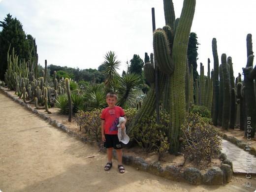 Кактусы, ч 1. Испания. Санта Сусанна.  Ботанический сад.  фото 26