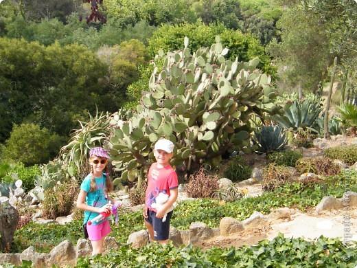 Кактусы, ч 1. Испания. Санта Сусанна.  Ботанический сад.  фото 27