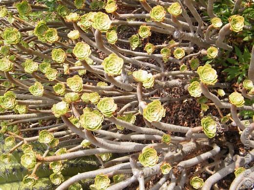 Кактусы, ч 1. Испания. Санта Сусанна.  Ботанический сад.  фото 28