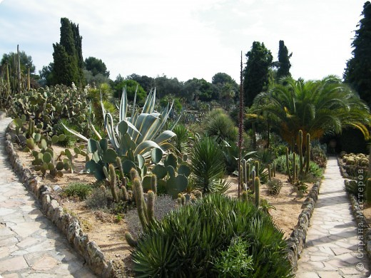 Кактусы, ч 1. Испания. Санта Сусанна.  Ботанический сад.  фото 30