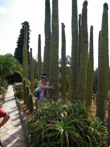 Кактусы, ч 1. Испания. Санта Сусанна.  Ботанический сад.  фото 33