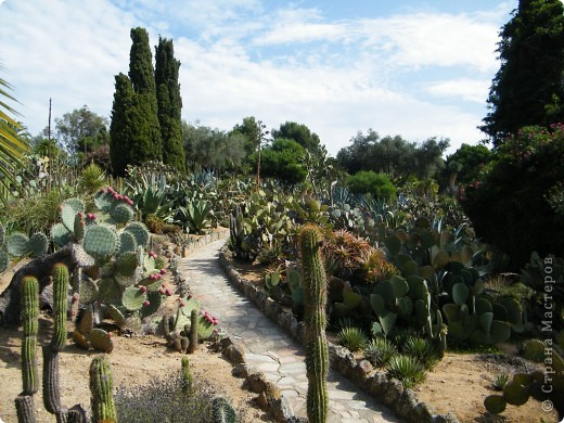 Кактусы, ч 1. Испания. Санта Сусанна.  Ботанический сад.  фото 31