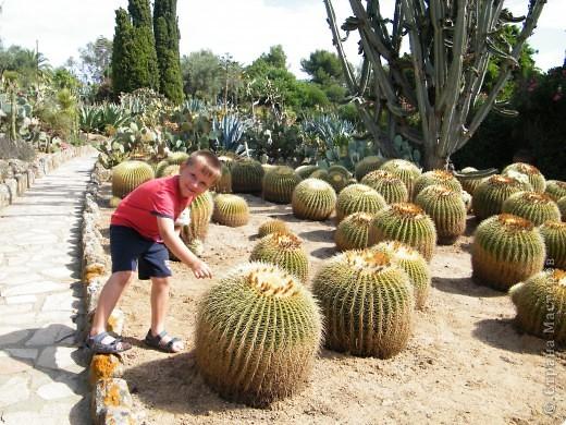Кактусы, ч 1. Испания. Санта Сусанна.  Ботанический сад.  фото 32