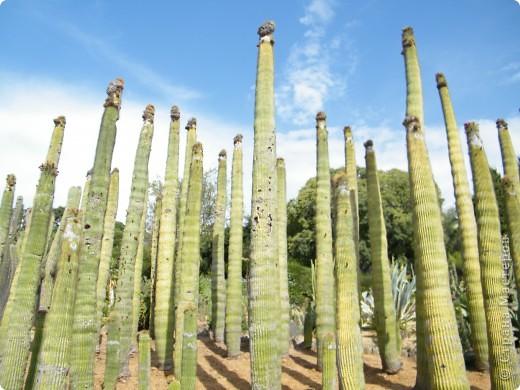 Кактусы, ч 1. Испания. Санта Сусанна.  Ботанический сад.  фото 34