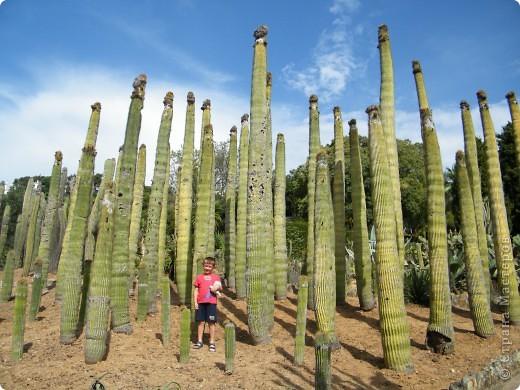 Кактусы, ч 1. Испания. Санта Сусанна.  Ботанический сад.  фото 35