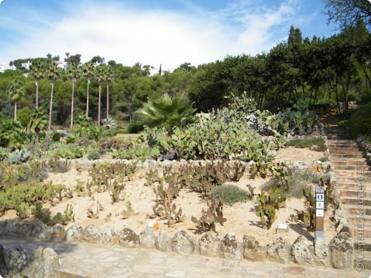 Кактусы, ч 1. Испания. Санта Сусанна.  Ботанический сад.  фото 36