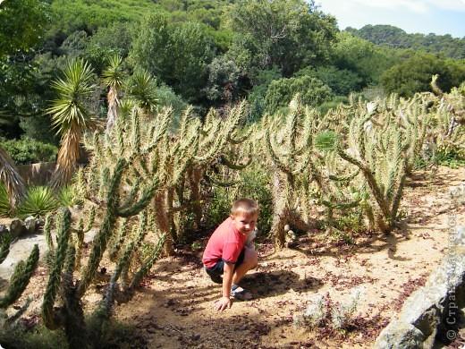Кактусы, ч 1. Испания. Санта Сусанна.  Ботанический сад.  фото 37