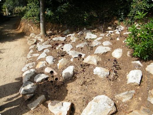 Кактусы, ч 1. Испания. Санта Сусанна.  Ботанический сад.  фото 9