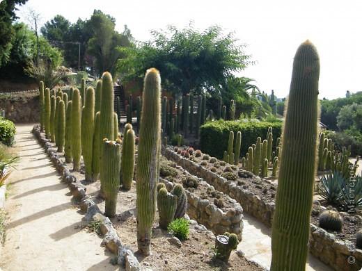 Кактусы, ч 1. Испания. Санта Сусанна.  Ботанический сад.  фото 39