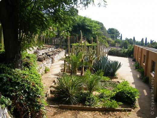 Кактусы, ч 1. Испания. Санта Сусанна.  Ботанический сад.  фото 40