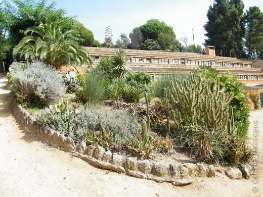 Кактусы, ч 1. Испания. Санта Сусанна.  Ботанический сад.  фото 42