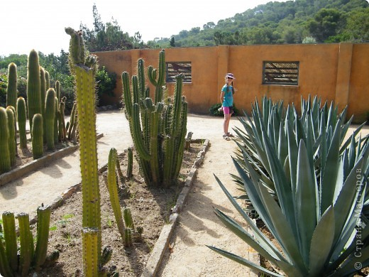 Кактусы, ч 1. Испания. Санта Сусанна.  Ботанический сад.  фото 43