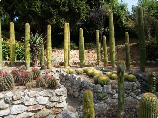 Кактусы, ч 1. Испания. Санта Сусанна.  Ботанический сад.  фото 53