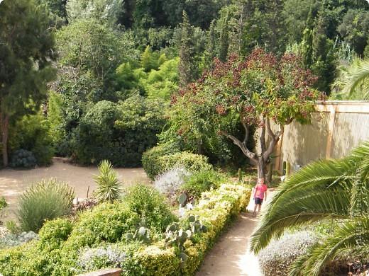 Кактусы, ч 1. Испания. Санта Сусанна.  Ботанический сад.  фото 54