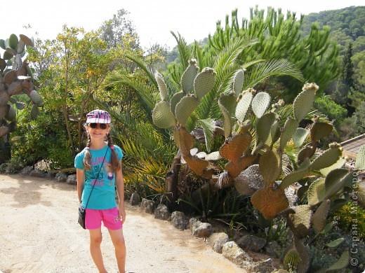 Кактусы, ч 1. Испания. Санта Сусанна.  Ботанический сад.  фото 57