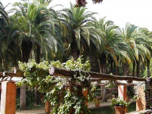 Кактусы, ч 1. Испания. Санта Сусанна.  Ботанический сад.  фото 59