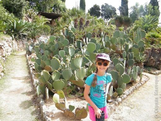 Кактусы, ч 1. Испания. Санта Сусанна.  Ботанический сад.  фото 19