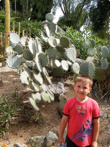 Кактусы, ч 1. Испания. Санта Сусанна.  Ботанический сад.  фото 22