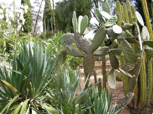 Кактусы, ч 1. Испания. Санта Сусанна.  Ботанический сад.  фото 63