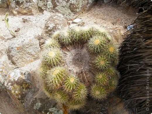 Кактусы, ч 1. Испания. Санта Сусанна.  Ботанический сад.  фото 66