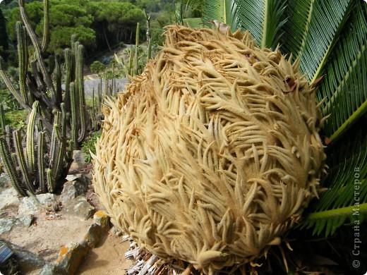 Кактусы, ч 1. Испания. Санта Сусанна.  Ботанический сад.  фото 68