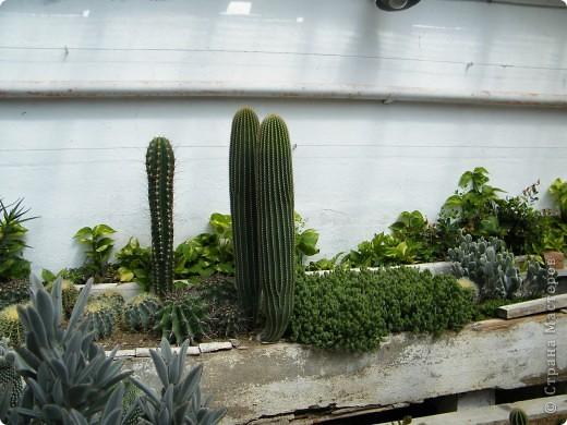Кактусы, ч 1. Испания. Санта Сусанна.  Ботанический сад.  фото 45