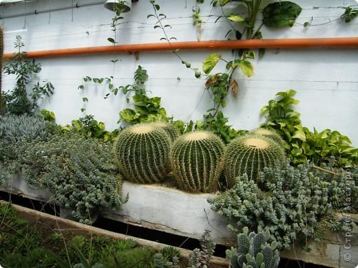 Кактусы, ч 1. Испания. Санта Сусанна.  Ботанический сад.  фото 48
