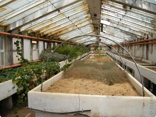 Кактусы, ч 1. Испания. Санта Сусанна.  Ботанический сад.  фото 50