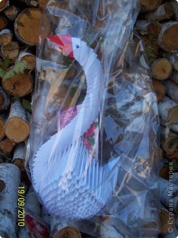 Белый Лебедь фото 3