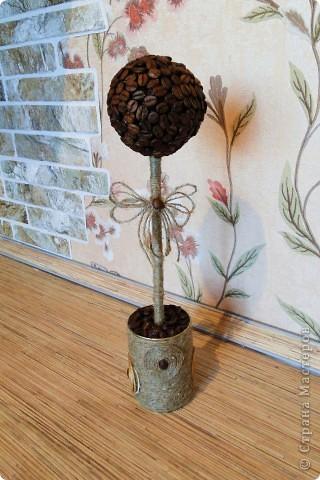 Мои кофейные деревья !! фото 1