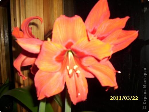 Вот он какой - цветочек алленький!!! фото 1