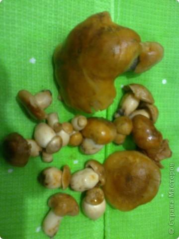 Эти грибочки-подтопольники.  фото 1