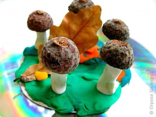 Ну какая же осень без грибов?! фото 1