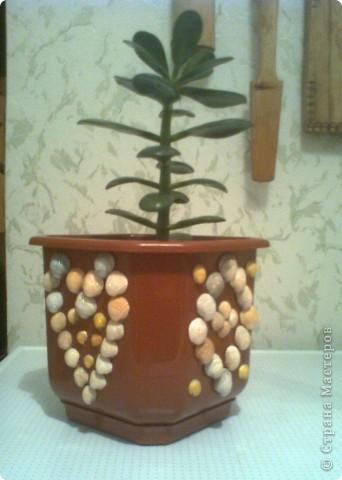 Речными ракушками и бисером украшаем самую простую вазочку. И пусть она напоминает нам о прошедшем лете, об отдыхе не берегу славной Оки. фото 2
