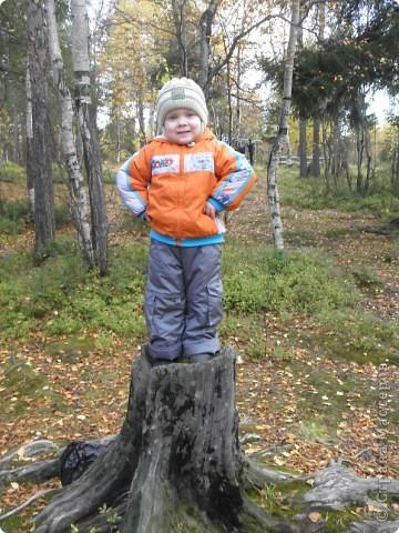 В детском саду сынишки, должна пройти выставка поделок из природного материала, посвященная осени. Вот мы вчера и насобирали шишек. И за 2 часа получилось это дерево. фото 5