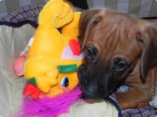 Вот такой малыш,однажды,появился у нас в доме))))...... фото 8